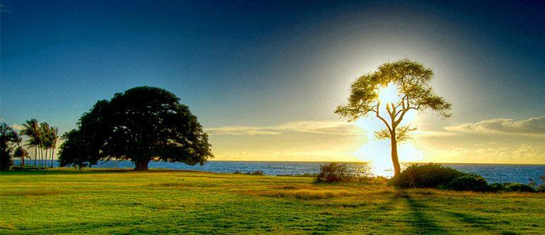 A natureza é a sinceridade manifestando a mais pura Verdade